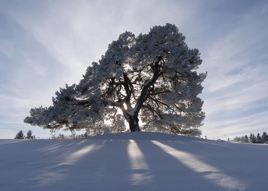 Eg-bakke-vinter